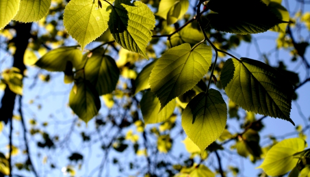 green-leaves-1180008.jpg