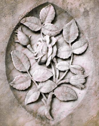stony-rose-1224766