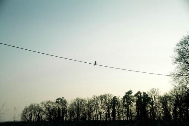 bird-926830_640